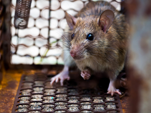 pest control services in panama city, fl